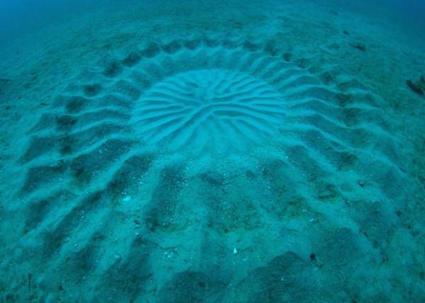 cerchio misterioso nel mare