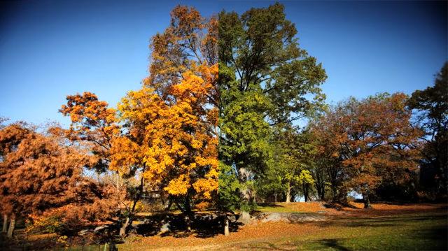 Fall: come cambia il paesaggio dall'estate all'autunno in 3 minuti