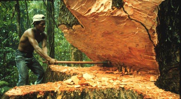 Brasile: un cellulare in ogni albero per combattere la deforestazione