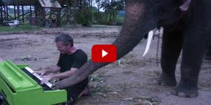 Peter, l'elefante che suona il piano a colpi di proboscide!