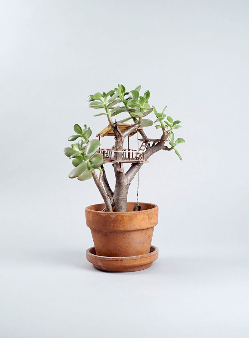 miniature-treehouse-houseplants-somewhere-small-jedediah-corwyn-voltz-8