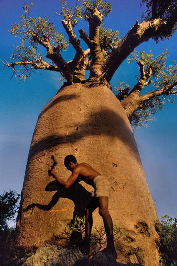 I 12 alberi pi antichi del mondo bioradar for Alberi alto fusto nomi