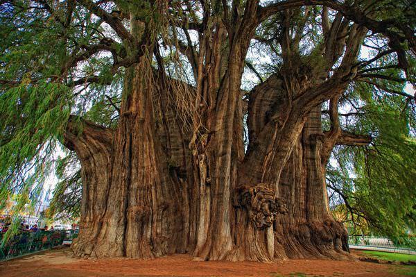 Albero di natale piu grande del mondo baobab