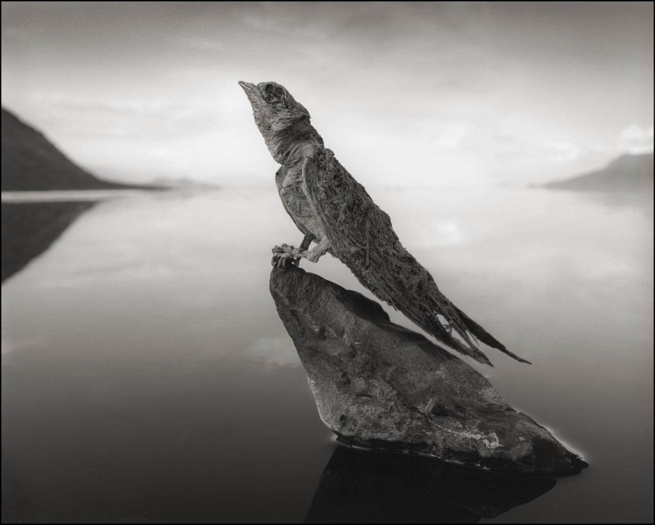 Tanzania, il lago Natron trasforma gli animali in statue