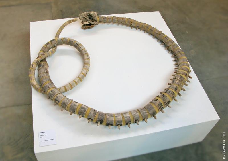 Fragile Skeletons, sculture fossili fatte di legno recuperato sulla spiaggia - Uroboro smemorato