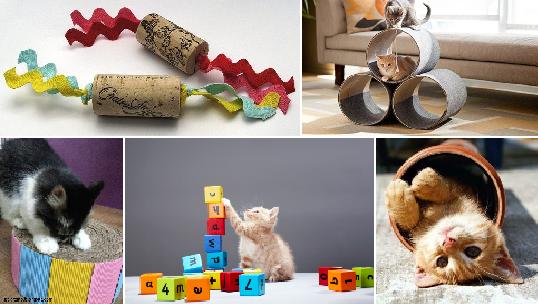 Giochi per gatti 10 idee per realizzarli con il fai da te for Come costruire una casa economica per conto proprio