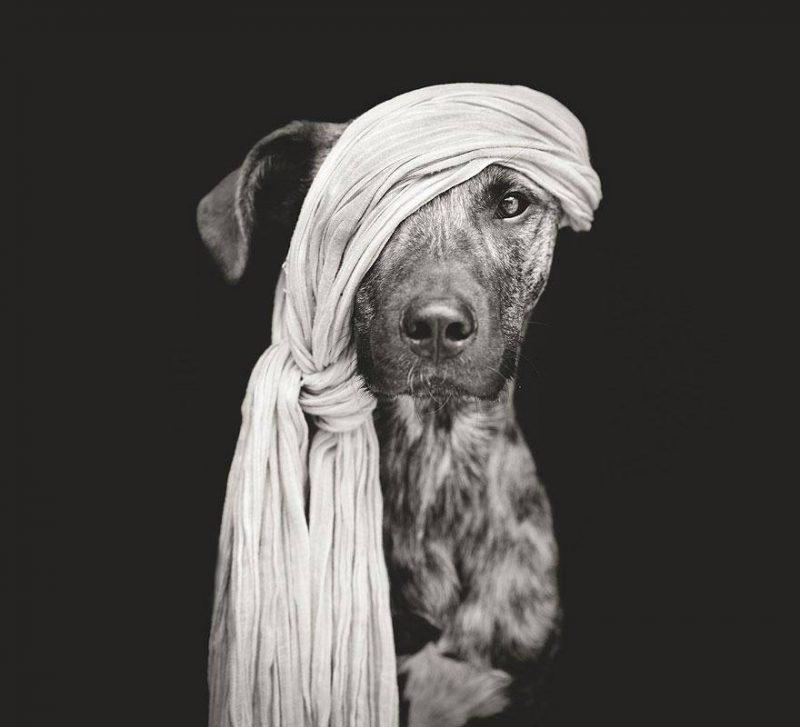 Dog Model: 3 cani che si credono fotomodelli