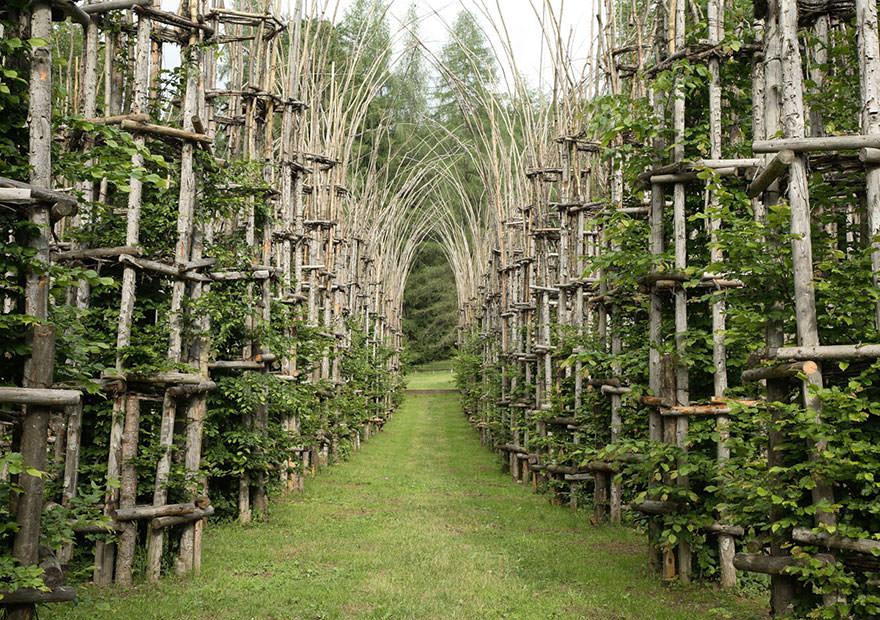 Architettura naturale la cattedrale di alberi capolavoro for Architettura natura