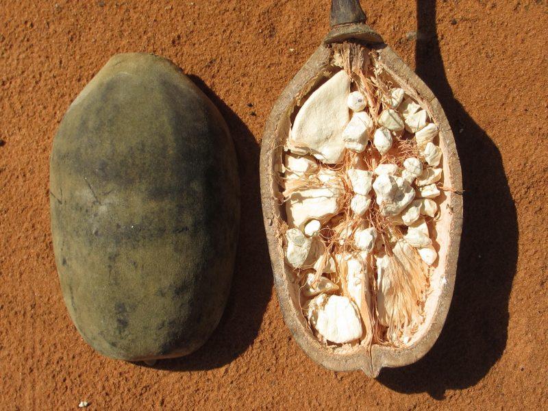 Baobab_-_fruit_(8750413322)