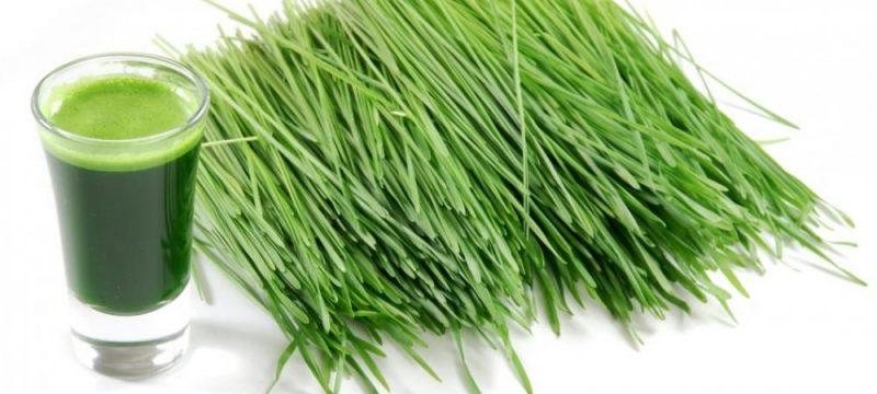 cropped-cut-wheatgrass-and-a-glass-of-wheatgrass-juice1