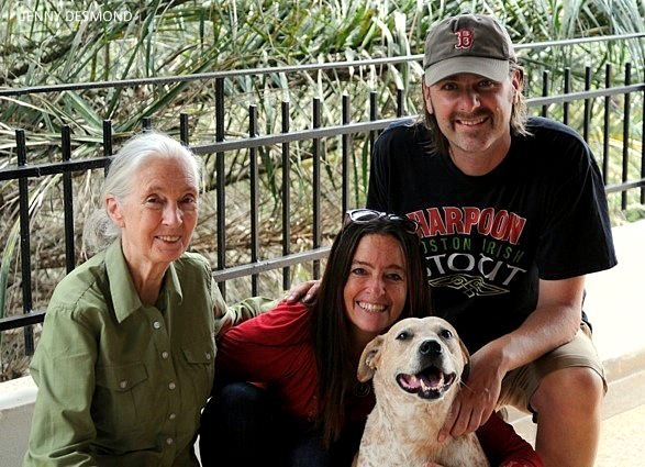 foster-dog-and-jane-goodall