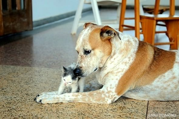 foster-dog-and-kitten